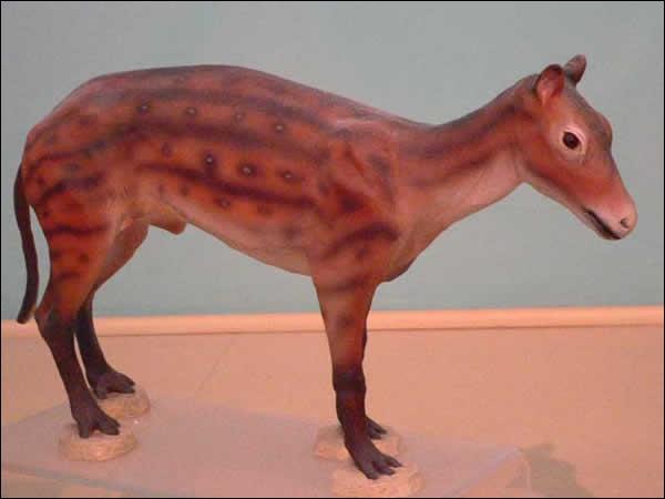 Comment s'appelle l'ancêtre du cheval ?