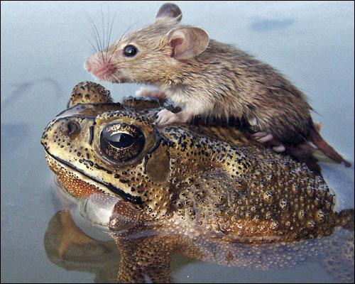 Raton ou souriceau !