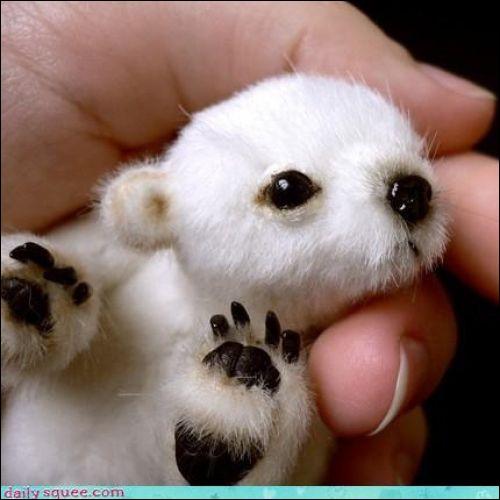 C'est un bébé panda !
