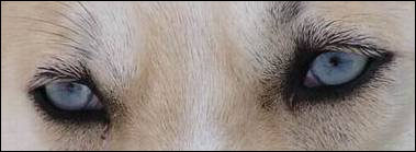 De qui sont ces beaux yeux ?