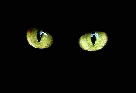 A qui appartient cet oeil/ces yeux ?