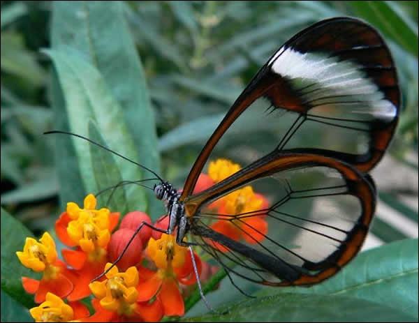 Il volette de fleur en fleur et s'arrête pour aspirer le nectar avec sa trompe qu'il déroule. Comment s'appelle-t-il ?