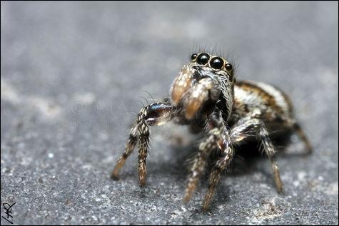 Bien que ce ne soit pas un insecte car elle possède huit pattes, elle tisse une toile et mange les insectes qui se sont collés dedans. Quelle est cette petite bête adorable ?