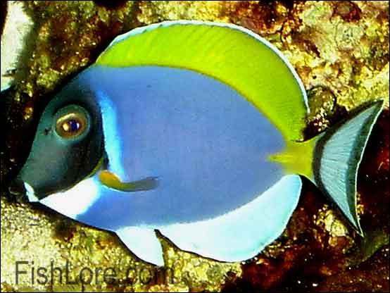 Je suis ravissant, d'une très grande résistance mais n'aime pas les poissons bleus