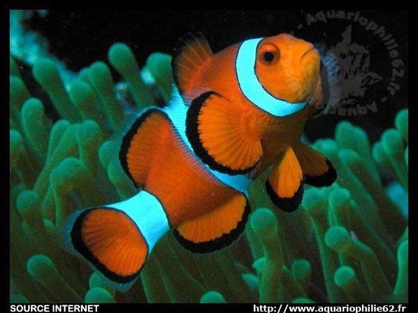 Les poissons d'eau de mer