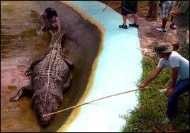 Le dieu Sobek est représenté avec une tête de crocodile !