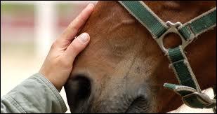 Je suis un vétérinaire spécialisé chez le cheval. Qui suis-je ?