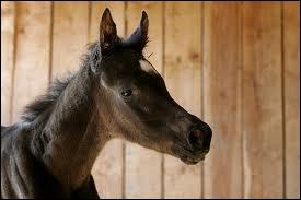 Au contraire, je m'occupe de toutes les écuries de chaque cheval et de chaque équipement. Qui suis-je ?