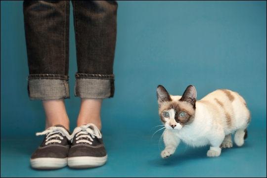 Combien de centimètres mesure le chat le plus petit ? (C'est incroyable ! )