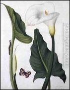 Callas avec papillon et chenille a été peint par l'artiste ?