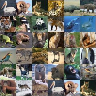 En moyenne, combien d'animaux sont en voie de disparition ?