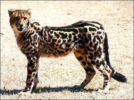 Quelle est cette espèce d'animal ?