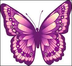 Quelle est la couleur de ce papillon ?