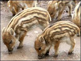 Que sont ces petits animaux ?