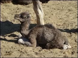 Vous avez reconnu ce bébé :