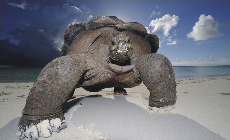 Une tortue d'Aldabra, recueillie aux Seychelles en 1875, vient de mourir, aurait-elle pu connaître Napoléon Bonaparte ?
