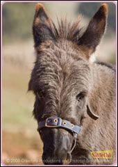 Quel est le nom de ce petit âne ?