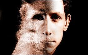 L'homme est un primate ?