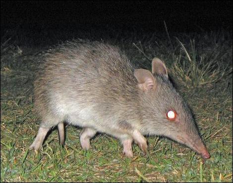 C'est un animal australien !