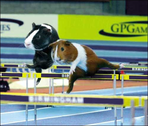 Pour ce sport, il faut être un homme très rapide !