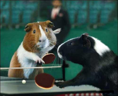 Evitez d'être dans le ping quand la balle arrive dans le pong !