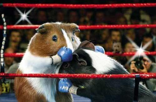 Les animaux et le sport !