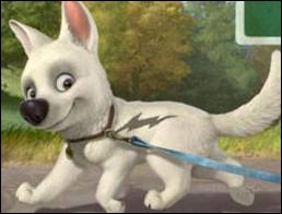 Comment s'appelle ce chien qui est une star malgré lui ?