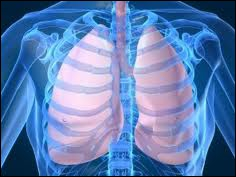 Comment s'appelle la membrane de la cage thoracique qui protège et entoure le poumon ?