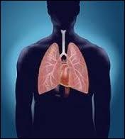 Le poumon droit et le poumon gauche sont de la même taille . Vrai ou faux ?