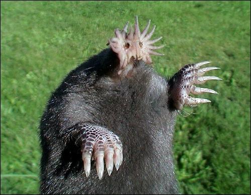 Cette créature, habilement truquée, vous l'avez vue dans le film 'Alien vs Predator' !