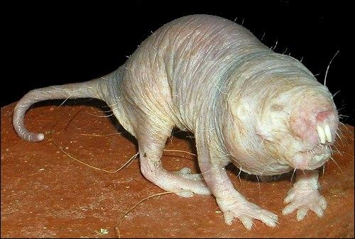 Cette créature n'a jamais figurée dans un film de science-fiction, c'est un animal bien réel !