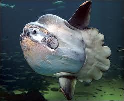 On n'a vu cet étrange poisson dans aucun film, il est réel !