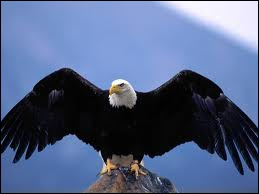 Comment s'appelle la femelle de l'aigle ?