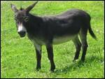 Quelle est la femelle de l'âne ?