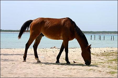 Connaissez-vous le nom de la femelle du cheval ?