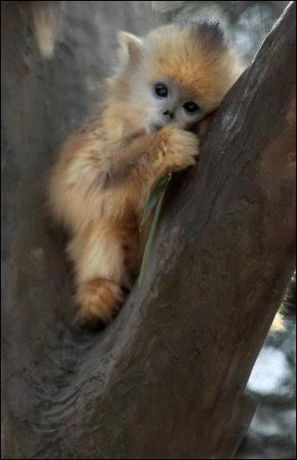 Ce chaton adore grimper aux arbres !