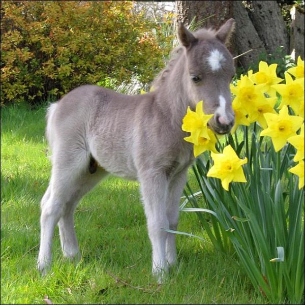Cet ânon aime gambader parmi les fleurs !