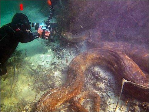 Ce plongeur n'a pas froid aux yeux, filmer un python en Amazonie demande du cran !