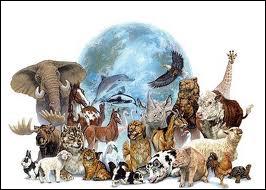 Quel est l'animal le plus gros ?