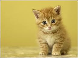Comment appelle-t-on le bébé du chat ?