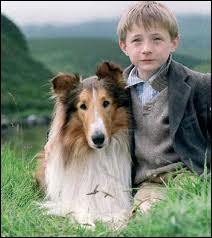 8 films et 4 séries télévisées ont été consacrées à Lassie. Quand est-elle apparue sur nos écrans pour la première fois ?