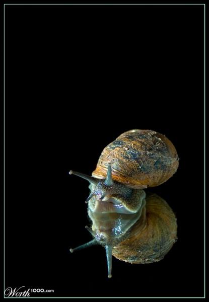 Un escargot peut-il être carnivore et cannibale ?