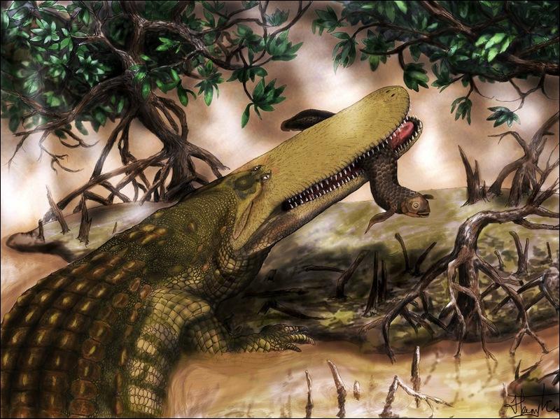C'est l'alligator à tête plate du Mississipi, il peut même attaquer un tapir !