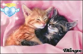 Quelle chatte est devenue ancienne sans avoir eu d'amour ?