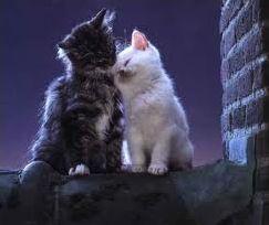 La Guerre des Clans - les amours entre chats