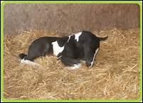 Qu'appelle-t-on un foal ?