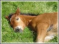 Quand fête-t-on l'anniversaire des chevaux ?