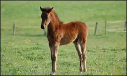 Qu'appelle-t-on un yearling ?