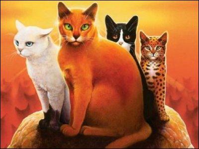 Pour commencer, qui sont les quatre chats sur l'image ?