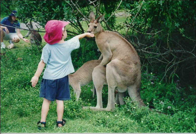 D'après vous, le kangourou est-il content de voir la petite fille !